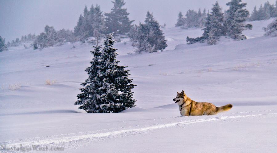 Happy Dog - Berthoud Pass