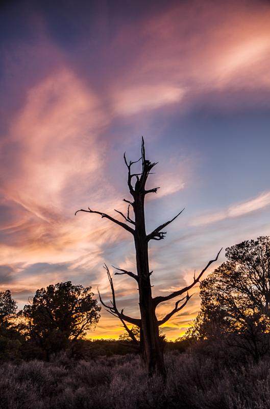 Studhorse Sunset