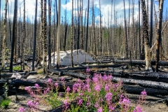 Burn, Boulder, and Fireweed