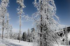 Frosty Trail