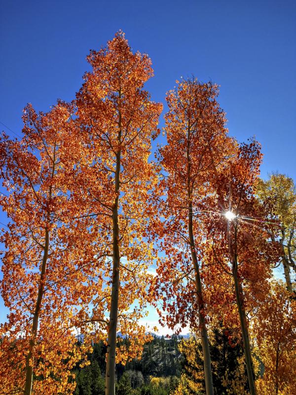 Fall Drama